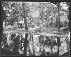Pondside (Attila Pasek (Albums!)) Tags: pond glass ambrotype sinarf1 forest camera rodenstock150mmf56 4x5 bugacikontaktfotográfiaitábor collodion