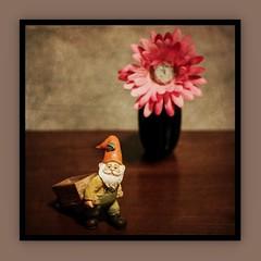 Still Life (N.the.Kudzu) Tags: tabletop stilllife resin figurine gnome vase flower canoneosm industar104 lightroom preset photoscape texture frame