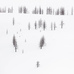 Bare Pines on Hill (jmswts) Tags: winter landscape 70200 minimal minimalism white snow california canon 5dsr