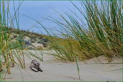 Journée plage (balese13) Tags: 1855mm arcachon d5000 lègecapferret nikonpassion bassin boisflotté boismort f9 flickr herbe nikon plage sable yourbestoftoday balese 1000v40f 500v20f 1500v60f