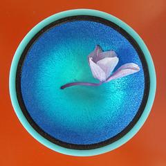 Moartea Orhideei (healing-garden) Tags: macro floare flower orhidee orchid moarte death violet purple albastru blue negru black oranj portocaliu orange colourful bright
