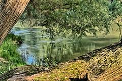 Watching the River Flow (gabi-h) Tags: mariakalnok hungary danube river water trees peacefulspot nearthevillage gabih reflections ripples
