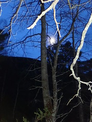 Cairngorms National Park (BSCG (Badenoch and Strathspey Conservation Group)) Tags: cnp forest dusk landscape tree flash march populus moon