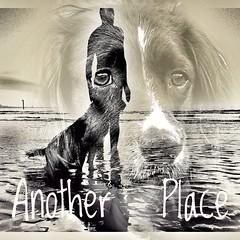 Fergus  at the beach. (Fergus the Springer) Tags: beach springer ess anotherplace anthonygormley dog s7edge englishspringerspaniel fergusthespringer