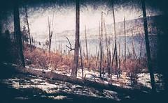 Hillside (Crusty Da Klown) Tags: okanaganmountianprovicialpark hillside nature scenery view landscape lake water bc britishcolumbia canada canon film kodak outdoors outside trees wilderness