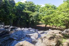 Rochester Falls / Заповедник Рочестер Фолс (dmilokt) Tags: природа nature пейзаж landscape гора лес дерево mountain forest tree вода водопад water waterfall dmilokt