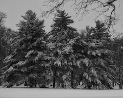 TowerGrovePark_SAF0158 (sara97) Tags: citypark copyright©2019saraannefinke missouri photobysaraannefinke saintlouis snow towergrovepark towergrovepark2019 winter winter201819