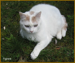 Mouna vient vous souhaiter une bonne semaine ! (Figareine- Michelle) Tags: chat coth coth5 bestofcats catmoments vg~catsgallery kittyschoice alittlebeauty