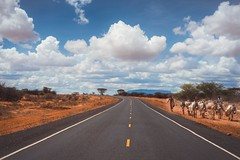 The Narrow Way (u c c r o w) Tags: road highway nature clouds sky donkey caravan africa ethiopia outdoor landscape