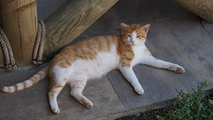 2015-09-19_12-27-02_ILCE-6000_DSC09150 (Miguel Discart (Photos Vrac)) Tags: 2015 79mm animal animalphotography animals animalsupclose animaux cat cats chat chats colakli e1670mmf4zaoss focallength79mm focallengthin35mmformat79mm holiday hotel ilce6000 iso100 kamelya kamelyaworld nature naturephotography pet sony sonyilce6000 sonyilce6000e1670mmf4zaoss summer turkey turquie vacance vacation