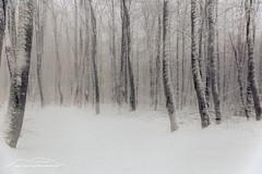 Geister Wald (Bianchista) Tags: 2019 berg bianchista frost hoherodskopf januar landschaft schnee vogelsberg winter wald doppelbelichtung bäume baum geister forrest ghost