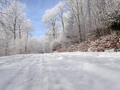 Willinger Winterweg (marion streich) Tags: winterfreude winter willingen waldweg raureif upland winterzeit