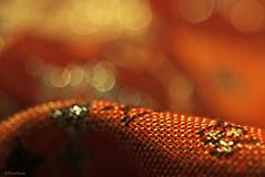 Pashmina (eleni m) Tags: pashmina macro bokeh orange yellow red dof pattern texture