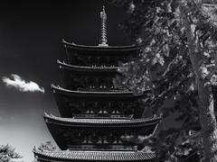 The pagoda and the pine tree (Tim Ravenscroft) Tags: pagoda tree pine kofukuji temple nara japan monochrome blackandwhite blackwhite hasselblad hasselbladx1d