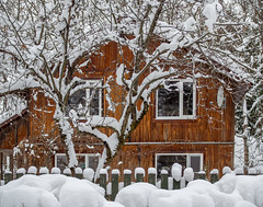 winter in Moscow region (marinachi) Tags: white winter house orange trees snow sundaylights wondersofwinter