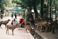 Fine (GingerKimchi) Tags: nara osaka japan travel nature asia film 35mm fujifilm canon deer canona1 2019 spring february march