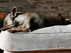 Photo of It's a dogs life