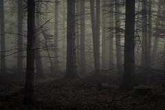 Mysterious (Netsrak) Tags: baum bäume eu eifel europa europe forst landschaft natur nebel rheinland rhineland wald fog forest landscape mist nature outdoor trees winter woods