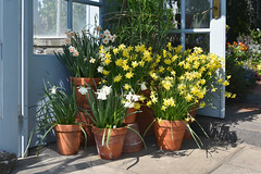 In the Doorway (Eddie C3) Tags: marcopolostufanoconservatory wavehill bronxnewyork botanicalgardens riverdale glasshouses flowers