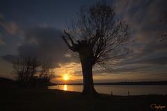 Dejalo ir...83/365 (cienfuegos84) Tags: atardecer sunset sol sun contraluz