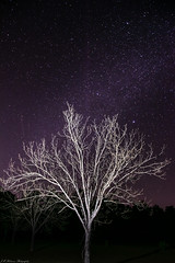 Astro Practice (brighteyespics) Tags: astro astrophotography copyrighted farm georgia lit nature naturephotographer naturephotography nightphotography nighttime outdoor pecantrees stars adobe d5300 fun lightroom night nikon nikond5300 purple