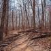 Hawksbill Crag - Whitaker Point Trail in the Upper Buffalo Wilderness, Arkansas