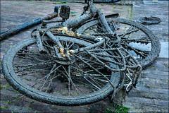 Found in the harbour (Ciao Anita!) Tags: middelburg zeeland nederland netherlands olanda fiets bicicletta bici bike binnenhaven haven harbour porto boekenweekgeschenk theperfectphotographer friends