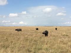 IMG_1566 (suuzin) Tags: masai mara safari