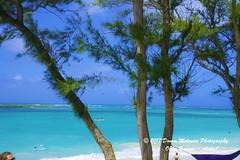 OAHU-HAWAII_1D51769-01 (Donna Molinari Photography) Tags: sanjose ca usa