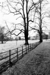 HTMT from Farmleigh (Wendy:) Tags: tree fence ir nik mono farmleigh htmt hff