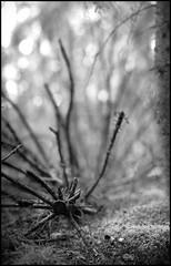 Gran (Eklandet) Tags: nature sverige sweden samsung sky scandinavia nordic countries naturephotography landscape fineartphotography landscapephotography naturelover monochrome monochromephotography bw svartvitt black white blackandwhite blackandwhitephotography blackandwhitephoto blackandwhitephotonatur lens samyang rokinon 135mm f20