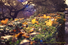 Ektachrome Reboot (Paul Swortz) Tags: 2018 35mm e6 nikonf3 autumn color ektachrome100 ektachromerefresh film iso100 oregon portland slidefilm swortz transparency
