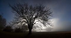landa 2 (juan luis olaeta) Tags: paisajes landscape arbol fog nieblas laiñoa canoneos60d natura contraluz landa panoramica