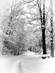 Snow Covered (Penny Des) Tags: snowstorm snow blackandwhite trees path nature covered