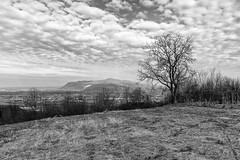 Tree with the view (Ivan Vranić hvranic) Tags: landscape svetonedeljskibreg croatia blackwhite tree