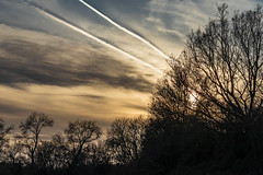 Clouds and Contrails (HaydenWright) Tags: dogwalks onetreehill essex walks landscape sunset scenic clouds trees evening contrails basildon sky skies beautiful langdon hills