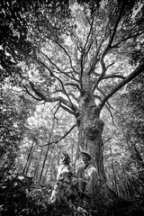 An Afternoon at Mother Tree (stevegilliesphoto) Tags: tree oaktree dog cat blackcat introspection summer woods tranquility leaves canopy canada ontario