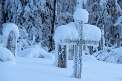_ROS5083-Edit.jpg (Roshine Photography) Tags: winter yukonquest yukonterritory environmental dawsoncity cemetery snow yukon canada ca