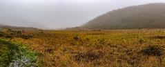 Sweeny Meadow rainy day panorama. Pacifica, CA. (j1985w) Tags: pacifica california sweenyridge rain sky fog grass hills