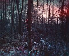 Urdinik ez dudanean gorria naiz. (Jaione Dagdrømmer) Tags: forest basquecountry euskalherria oiartzun fantasy light red landscape trees