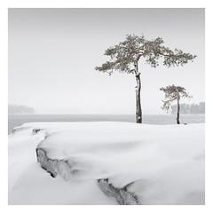 Two Pines (Vesa Pihanurmi) Tags: tree pine nature winter snow minimalism minimalistic finland helsinki vuosaari sea cliff baltic landscape