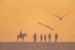 0954 Silhouettes (Hrvoje Simich - gaZZda) Tags: outdoors sky people animals horse birds silhouettes orange travel india asia nikon nikond750 sigma150500563 gazzda hrvojesimich