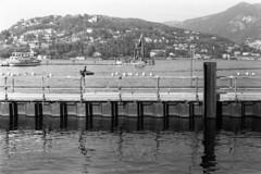 Ad ali spiegate... (sirio174 (anche su Lomography)) Tags: bird birds uccello uccelli ali wings como paratie lago lake italia italy zorki1 ilfordfp4125