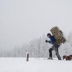 Schneechaos Januar 2019: Hilfe für Wild thumbnail