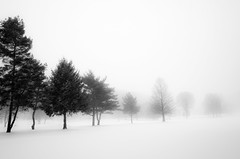 Fading into Winter (Eric Tischler) Tags: winter ohio cleveland monochrome tree landscape soft
