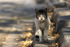 Madar, street cat (leporcia) Tags: animales animals cat cats chat chatterie catportrait katze katzen gatos gato gatto felino feline feralcat feral streetcat outdoor