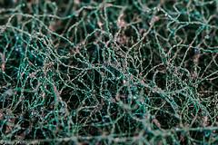 What is That ? (Balaji Photography : 6.6 Million+ views) Tags: whatisthat macromondays pad green macro macrolens pattern texture canon canon70d chennai porur scour scourpad scotchbrite 3m