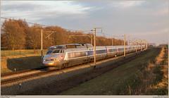 SNCF TGV 4511 + 4518 @ Enghien/Edingen (Wouter De Haeck) Tags: belgië belgique belgien infrabel l1 halle esplechin esplechingrenshsl hainaut henegouwen enghien edingen petitenghien lettelingen sncf sociéténationaledescheminsdeferfrançais tgv tgvr tgvréseau réseau gecalsthom brussel brusselzuid bruxelles bruxellesmidi strasbourg