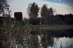 Reeds (Stefano Rugolo) Tags: stefanorugolo pentax k5 pentaxk5 smcpentaxm100mmf28 kmount ricoh reeds impression countryside lake barn water hälsingland sweden sverige manualfocuslens manualfocus manual vintagelens tree reflection sky autumn