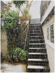 Weather (Orchids love rainwater) Tags: hss home courtyard weather